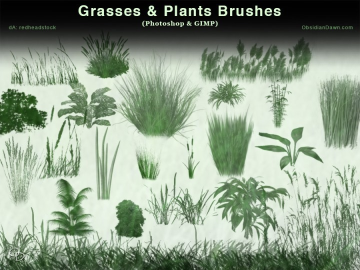 Grasses and Plants Photoshop Brushes