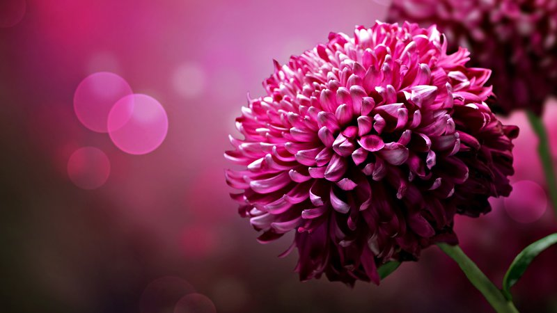 Pink Nature Flower