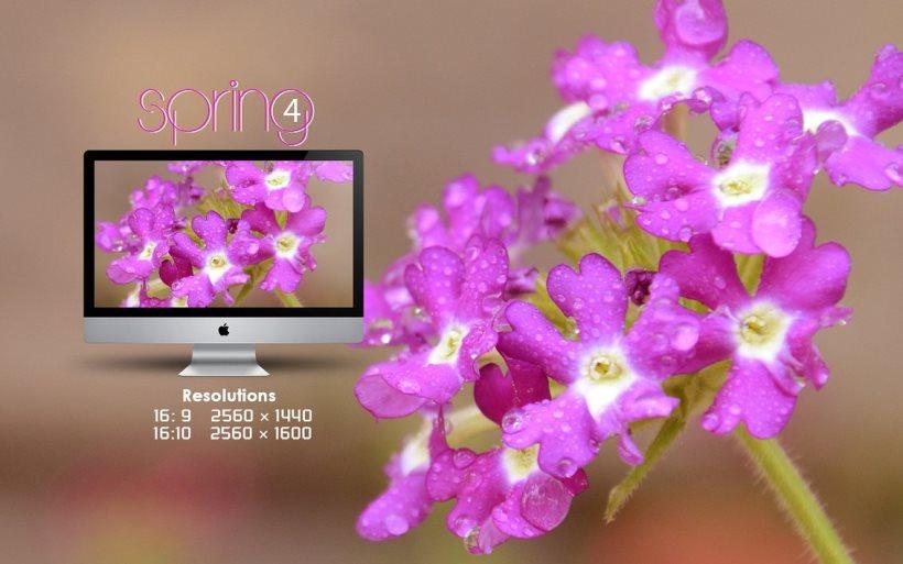 Spring4 Flower Wallpaper