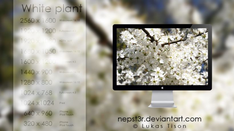 White Plant Wallpapers