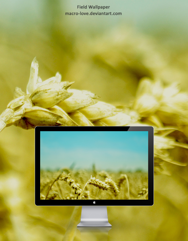 Field Wallpaper